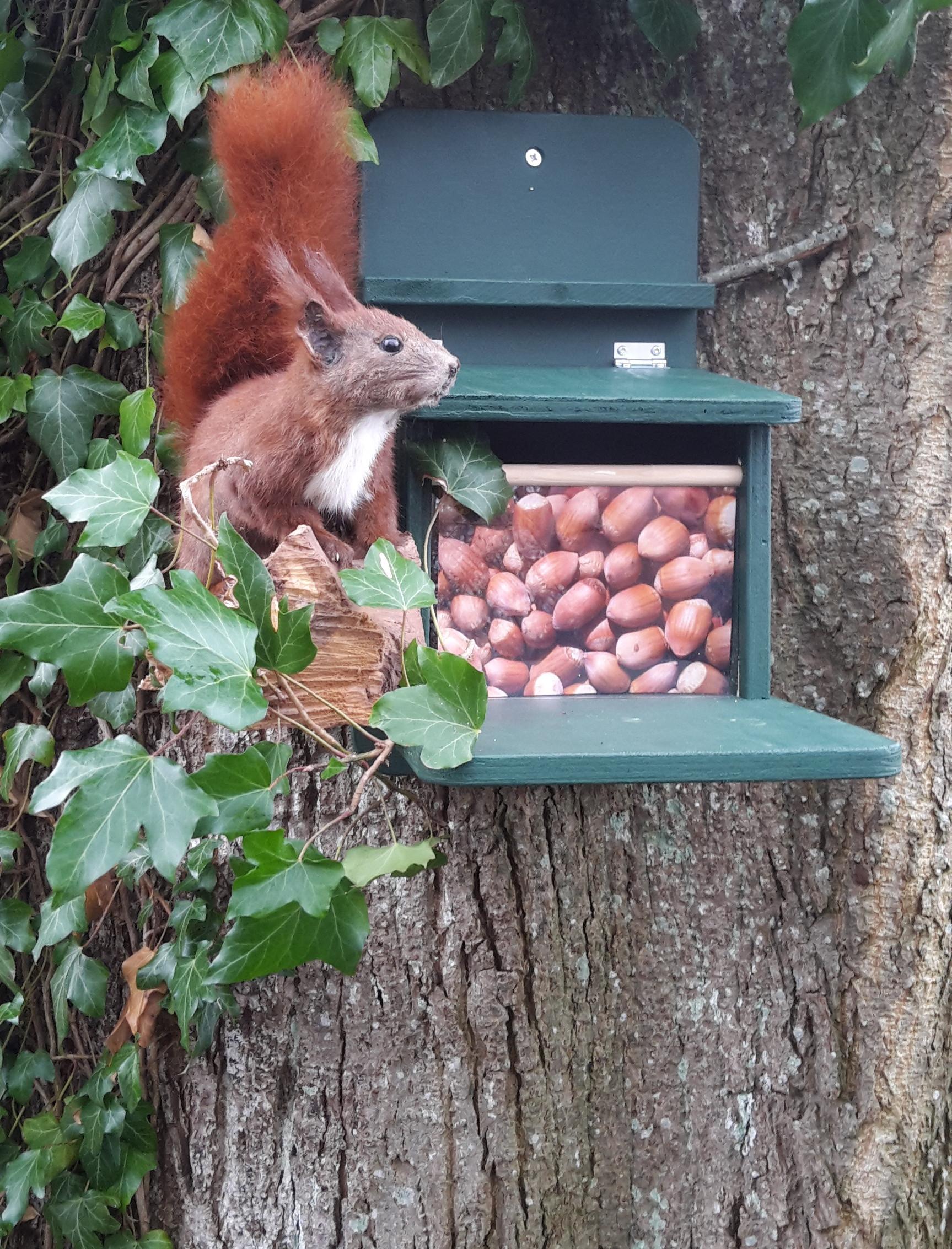 Eichhörnchen-Futterhaus