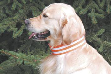 Hunde - Signalhalsung 5 cm breit mit Schnallenverschluss