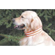 Hunde - Signalhalsung 5 cm breit mit Klettverschluss