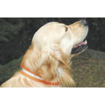 Hunde - Signalhalsung 3,5 cm breit mit Klettverschluss